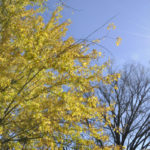 The Fading, Falling Leaves of Autumn