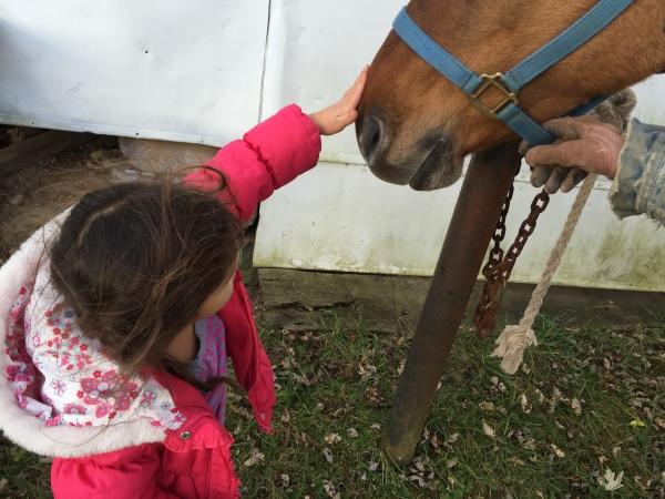 Rubbing horse's nose