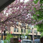 Springtime at Bar Italia