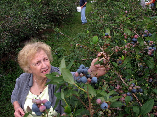 Jean and Blueberry picking