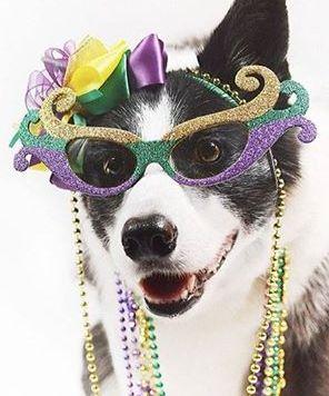 beggin dog parade2.jpg