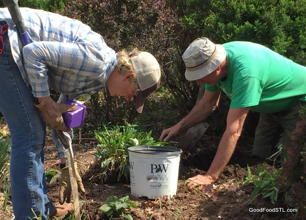 Weeding and planting are the harbingers of spring