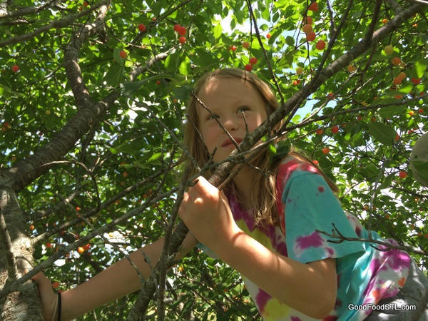 addie cherry tree farm