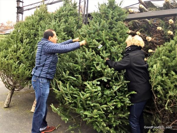 Robin Juan Carlos Christmas tree 2016