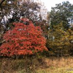 It's Fall in the Ozarks: Time to Wander Forest and Fields